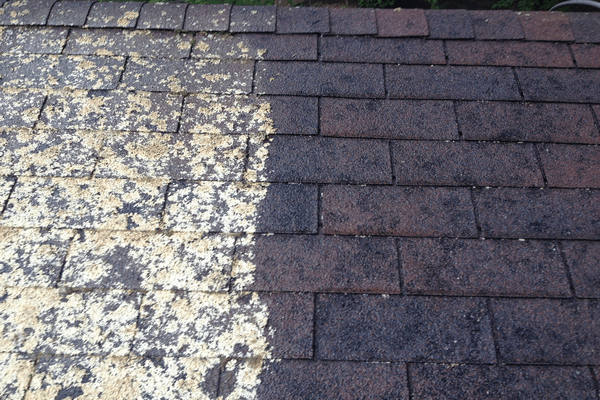 what causes lichen on roof