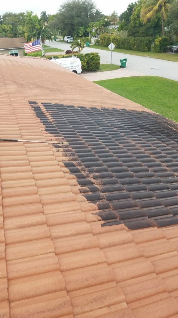 why is roof cleaning necessary